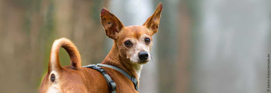 Tierheim Worms Hunde